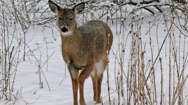 Illness Known As 'Zombie Deer Disease' Reported In 22 States