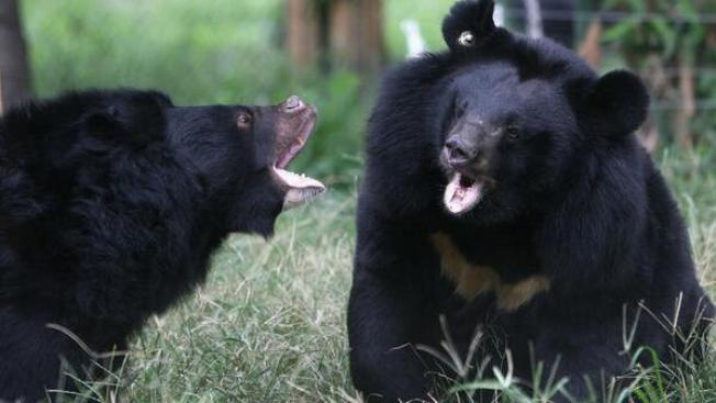 Florida Woman Recovering After Bear Attack