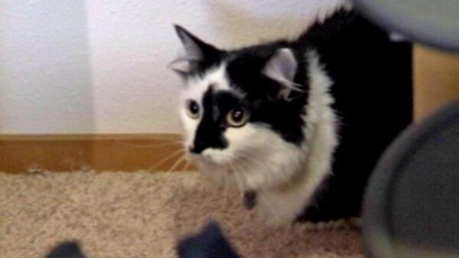 """Animal Planet's """"My Cat From Hell"""" Star to Meet Oregon Hostage Cat"""