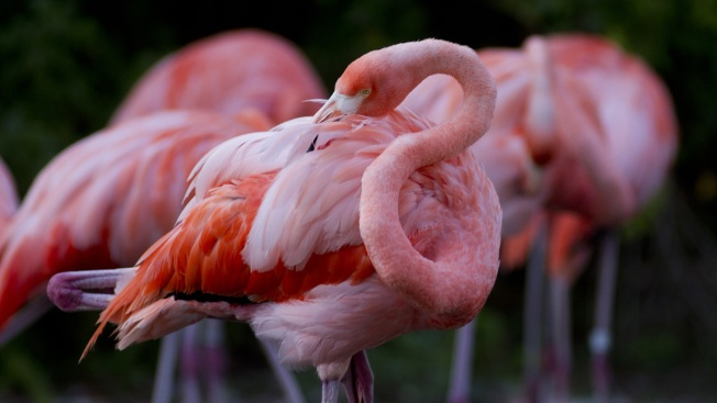 Boys Sneak Into Czech Zoo Enclosure and Stone Flamingo to Death