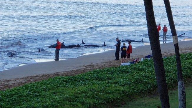 5 Whales Dead After Mass Stranding on Maui Beach