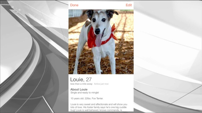 Local Shelter Using Dating App Tinder to Promote Pets