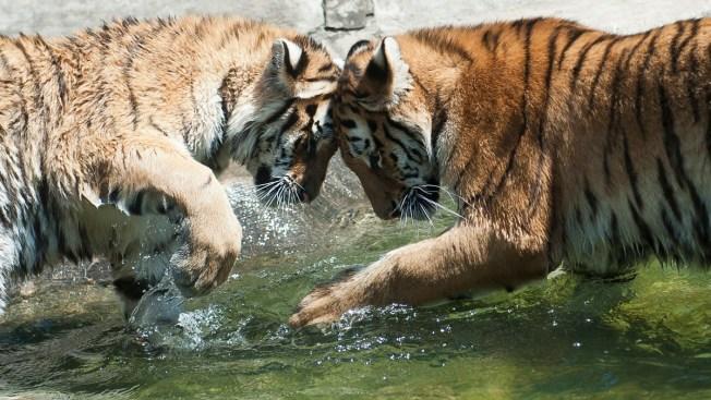 England Wildlife Resort Bans Animal Print Clothing