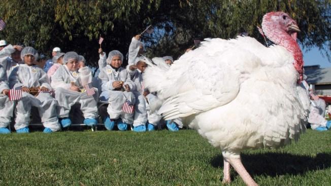 Trump Set to Pardon Thanksgiving Turkey