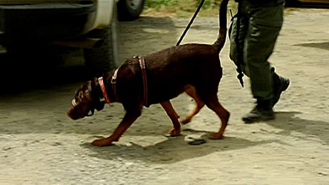 Florida Supreme Court Reinstates Drug-Sniffing Dog Conviction