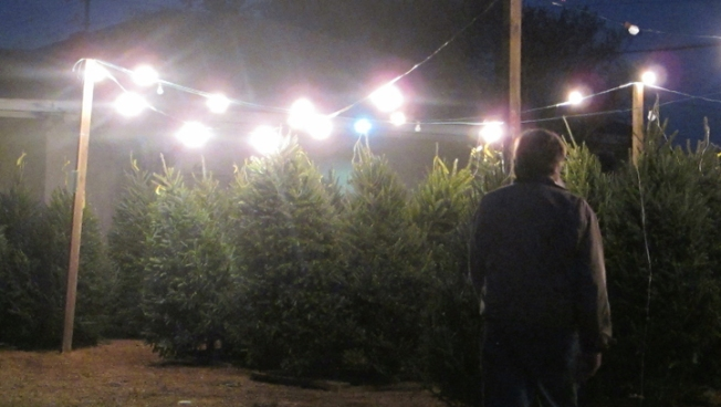 Grinch Steals More Than 50 Christmas Trees From Pensacola Lot