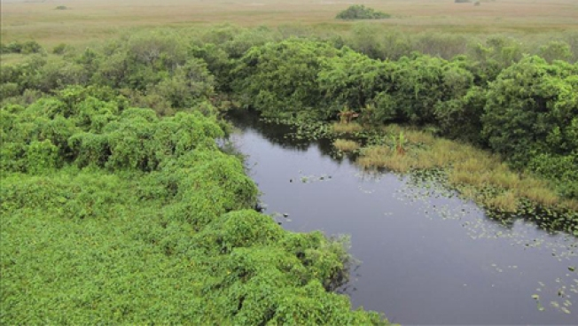 Miami Company Applies to Drill for Oil in Everglades