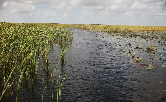 Hearing Set on End to Decades-Old Everglades Court Oversight
