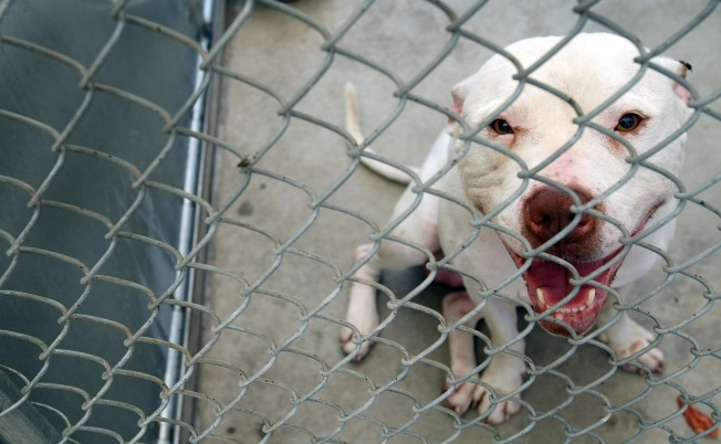 Broward Endorses No-Kill Policy in Animal Shelters