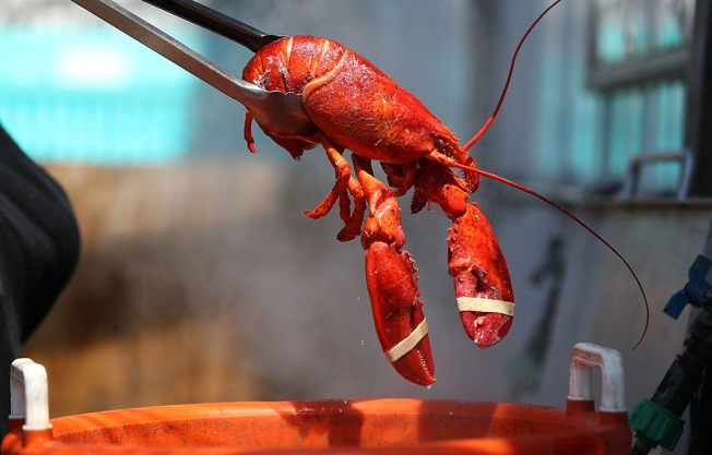 Florida Woman Charged With Stealing Live Lobster From Restaurant
