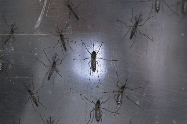 Pregnant Australian woman tests positive for Zika virus