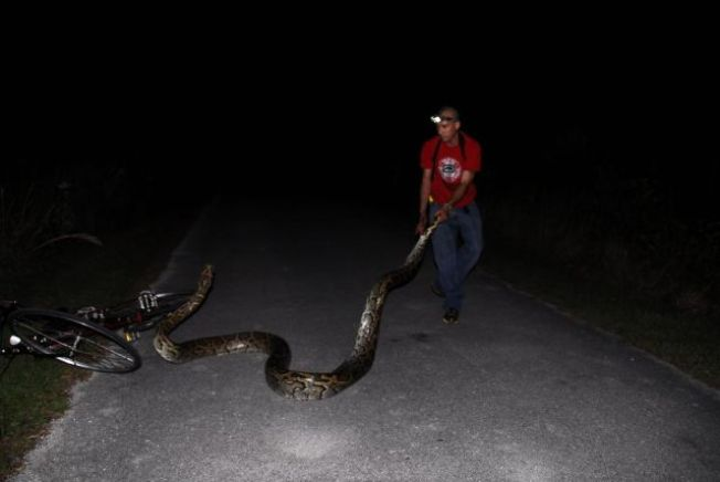 Officials Push for Python Hunt