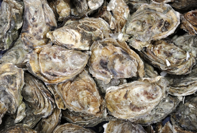 2 Tons of Illegally Harvested Oysters Seized