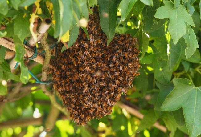 Heart Attack - Not Killer Bees - Doomed Miami Man