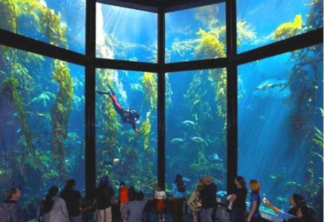 $130 Million Aquarium, Research Lab Proposed in Florida