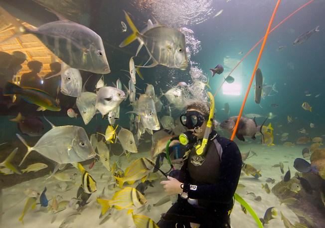 New Keys Aquarium Gives Visitors Immersive Experience