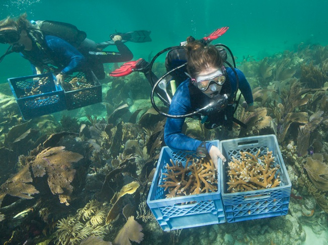 Divers Plant Staghorn Coral in Florida Keys to Mark World Oceans Day