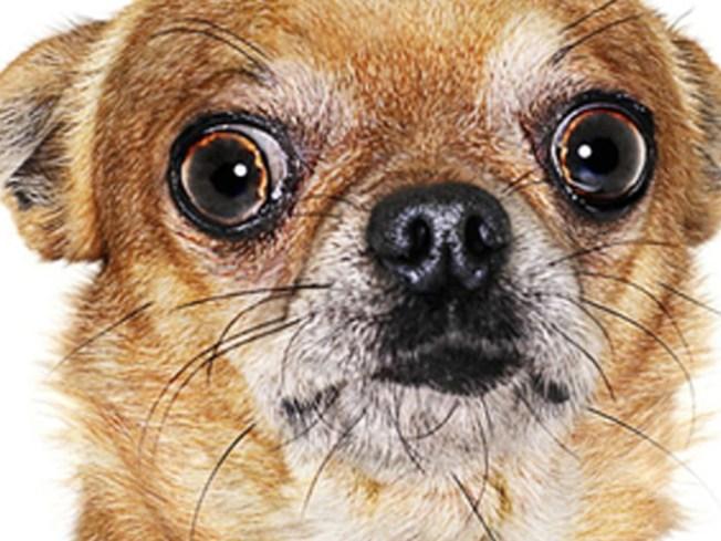 County Sues Condo Over Prescription Pet