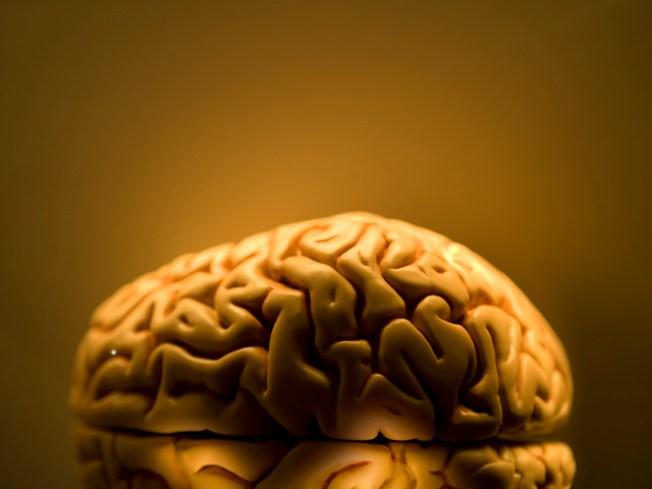 Blow your diet? Blame your brain