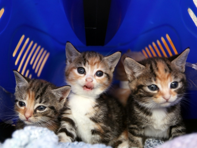 Bomb Squad Defuses Box Full of Kittens