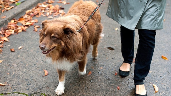 Scientists: Give Us Your Dog's Poop