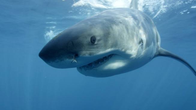 2 Suffer Minor Shark Bites in Central Florida Waters