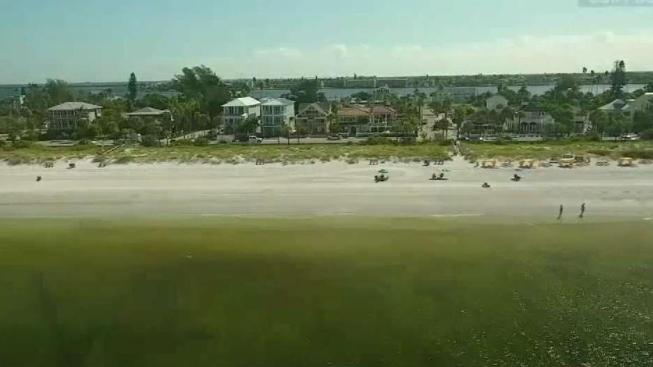 Red Tide Levels Drop Along Parts Of Floridas East Coast Nbc 6