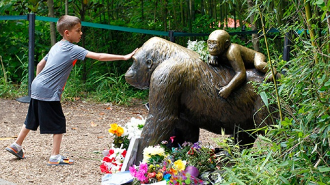 Cincinnati Zoo Deletes Twitter Accounts Amid Harambe Comments