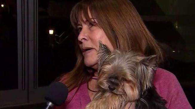 I Am In Heaven Womans Emotional Reunion With Stolen Yorkie Nbc