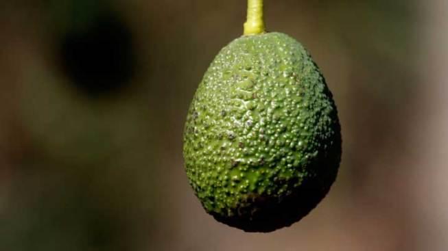 Avocado Picker Shocked by Power Line in Tree: Miami Fire Rescue
