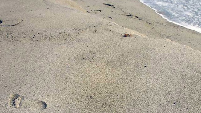 Broward County Warns Swimmers About Water at 4 Beaches