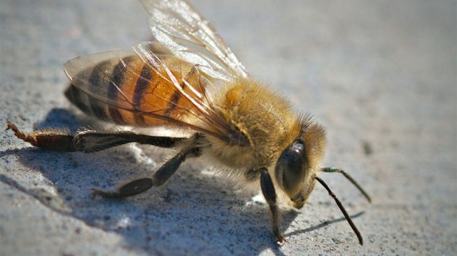 Two Tampa Parks Workers Stung By Swarm of Bees