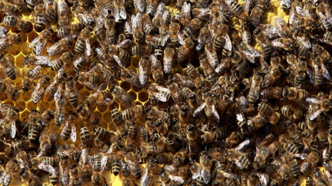 20,000 Bees Removed From 98-Year-Old Woman's Home