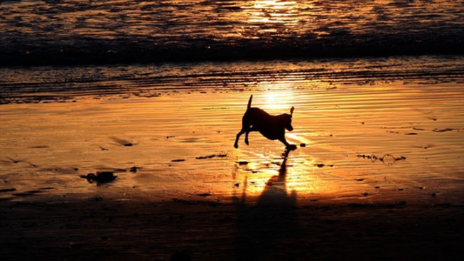 South Florida Dog Owners Can Bring Canine Counterparts to Haulover Beach