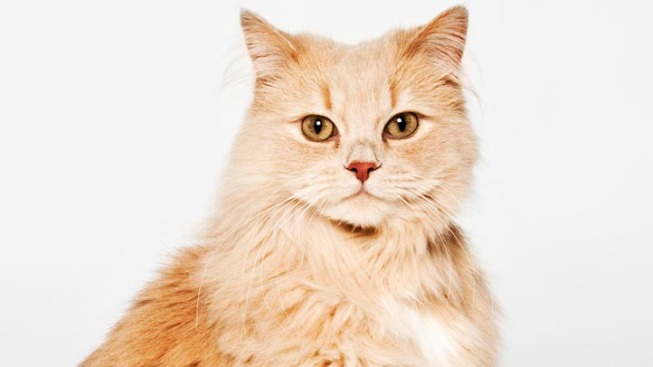 Cat Saves Wis. Woman's Life