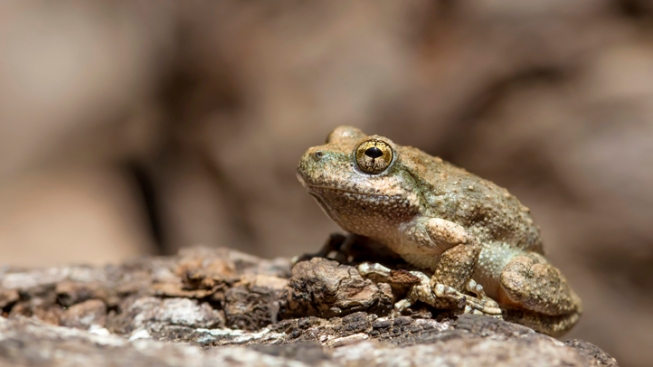 Neighbor Call Cops Over Frog Mating Calls