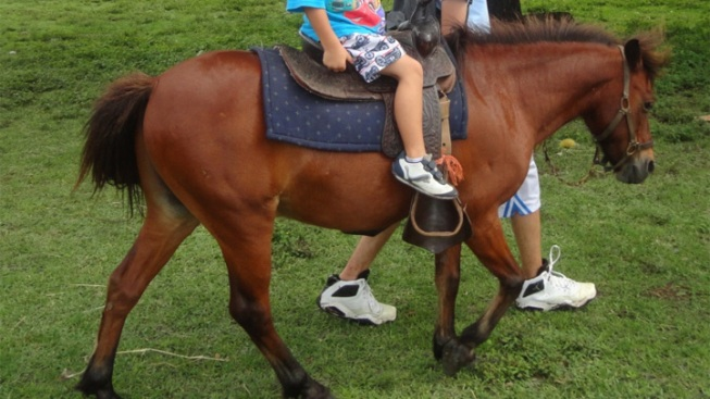 Ponies Stolen From Youth Ranch Found
