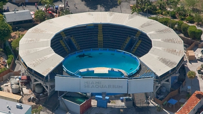 Miami Seaquarium Fined by OSHA