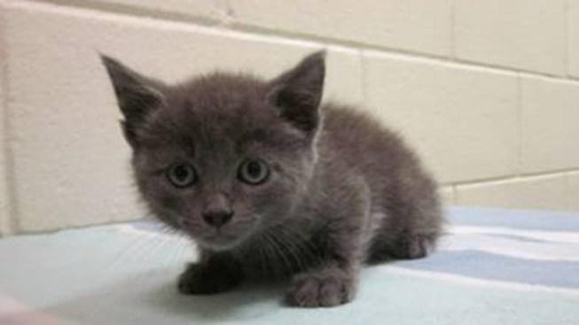 Whoopi Goldberg Adopts Kitten Tossed on NY Bridge