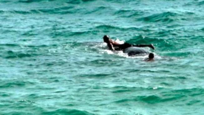 NOAA Slaps Warning on Florida Man Who Rode Whale