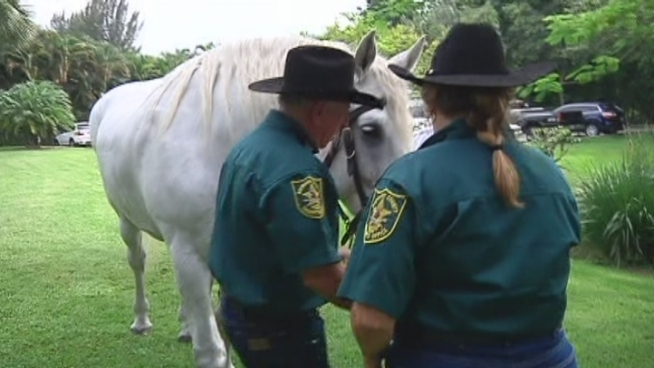 The Broward Sheriff s Office is saying goodbye to one of its longtime veterans -- a 2O-year-old horse named Greystoke. Michael Catalano of the BSO said the horse was a good partner.