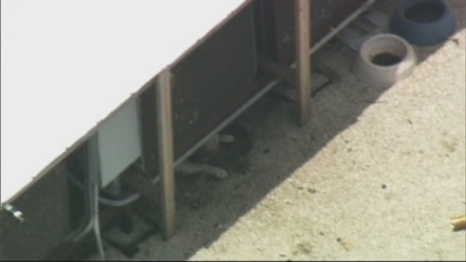 Miami-Dade Animal Services told NBC 6 South Florida they've been getting calls about a dog on a roof since June of last year. On Wednesday they were called to investigate allegations of animal cruelty again after people riding on the Metrorail saw the dog on the roof. Kathy Labrada from Animal Services speaks to NBC 6.