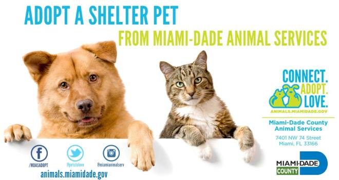Miami-Dade Dogs Waiting For Adoption Getting Fun Day Out