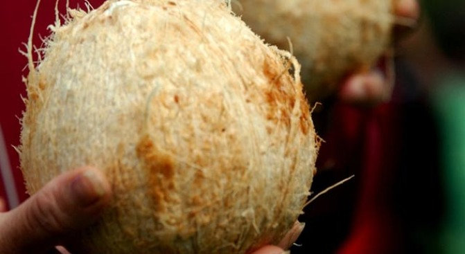 Nuts About Coconuts