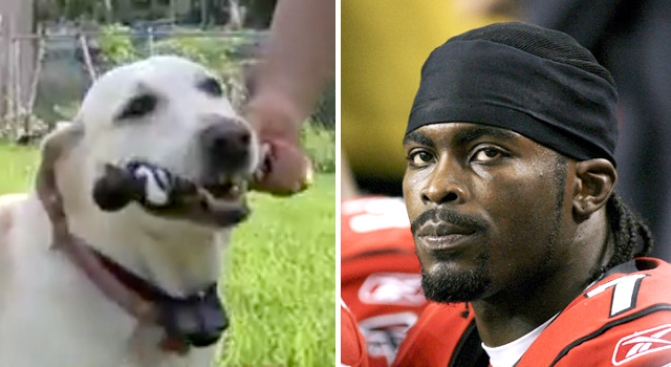 Michael Vick Chew Toy in the Jaws of Justice
